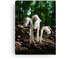 Indian Pipes In The Forest Canvas Print