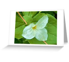 Trillium - after the rain Greeting Card