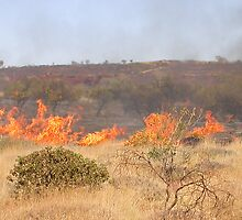 Spinifex Fire by Antony Matzkov