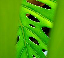 peepholes by Jan Stead JEMproductions