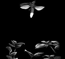 Firefly by Mike Rigby