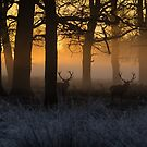 Stags at Sunrise by Martin Griffett