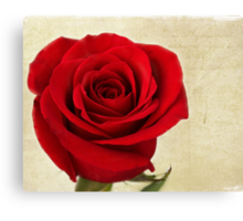 Rose of Love Canvas Print