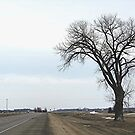 The Half Way Tree (between Winnipeg & Brandon MB) by Stephen Thomas