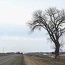 The Half Way Tree (between Winnipeg & Brandon MB) by Stephen Thomas
