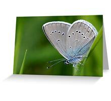 Farfalla Greeting Card