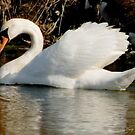Swan Wing Delight by Mary Campbell