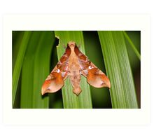 The Moth Of Stunning Beauty Art Print