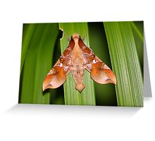The Moth Of Stunning Beauty Greeting Card