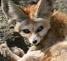 Desert Fox by wingsyves