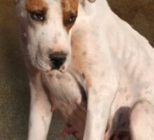 handle with care,  street dog portrait Sticker