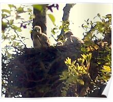 Baby Hawks Poster