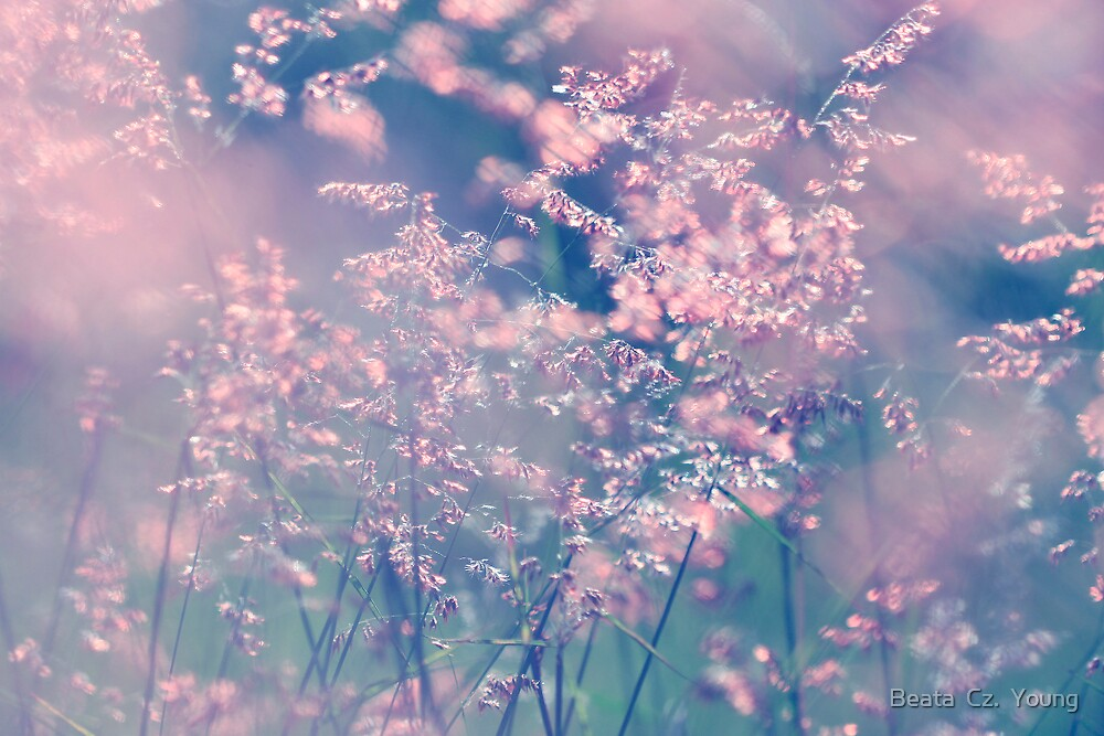 When the wind turns pink. by Beata  Czyzowska Young