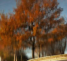 Greenwich Park Reflection by Tim Fenton