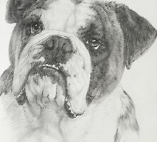 American Bulldog by BarbBarcikKeith