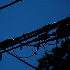 Power Lines 3 by Justin1982