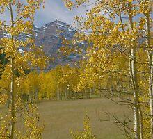 Aspen at Maroon Bells by Daniel Doyle