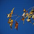 Autumn by Catherine Davis