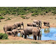 Herd of Elephants at Waterhole Photographic Print