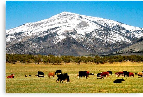 Pasture & Peak by J. D. Adsit