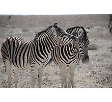 Zebra Kisses Photographic Print