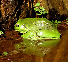Frog Mirror - Ashby, New South Wales by Deanna Roberts Think in Pictures