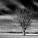 Near Clunes by Victor Pugatschew