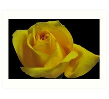The Breast Cancer Rose Art Print