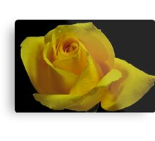 The Breast Cancer Rose Metal Print