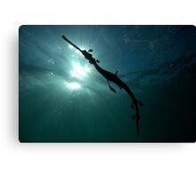 Seadragon Silhouette Canvas Print