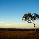 Mangrove by Heath Carney