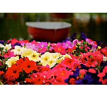 Red Boat Flower Bed 2 Photographic Print