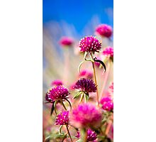 Wildflower Season Photographic Print