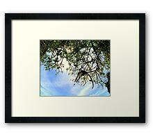 MONKEY CATCH.... Framed Print
