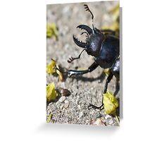 stag beetle Greeting Card