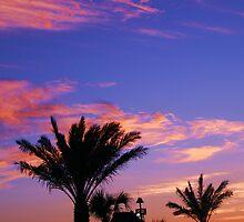 Palm tree shilloutte by mel1forjon
