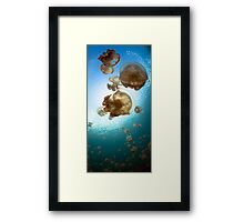 Jellyfish Lake Framed Print