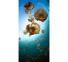 Jellyfish Lake Photographic Print