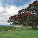 New Zealand Christmas Tree...........! by Roy  Massicks