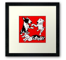 English Bull Terrier Family  Framed Print