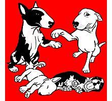 English Bull Terrier Family  Photographic Print