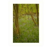 Bluebell Forest Art Print