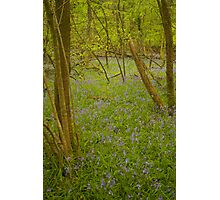 Bluebell Forest Photographic Print
