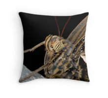 Caligo memnon head Throw Pillow