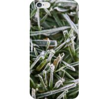 Jack Frost Visits San Diego! iPhone Case/Skin