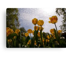 A bug's view Canvas Print