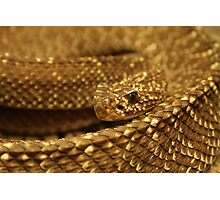 Sioux Snake Photographic Print