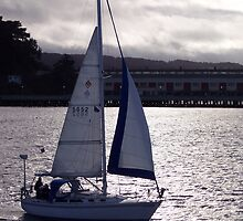 Sailboat in the Bay by CherylBee