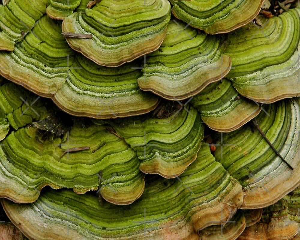 Green Velvet Waves by christiane