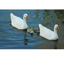 Family Swim Photographic Print